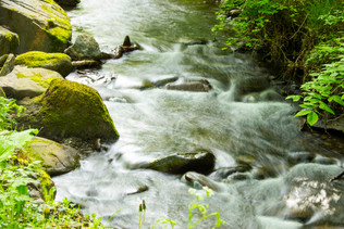 forest and stream-16.jpg