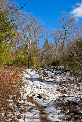 freetown state forest-18.jpg