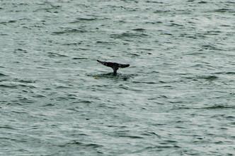 on the water-24.jpg
