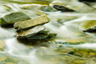 forest and stream-15.jpg