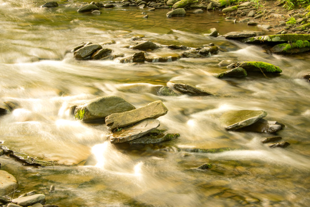 forest and stream-14.jpg