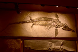 Some of these reptiles eventually came back to the water, but none that did could ever be considered dinosaurs.