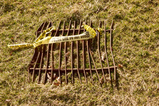 In a wide field, Indy-Anna came across a mangled grate.