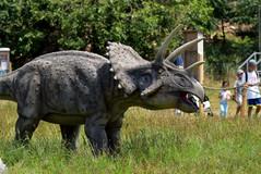 triceratops 4.jpg