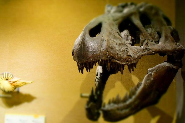 fossil banner.jpg