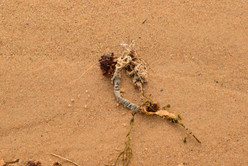To be honest, Ditch Plains Beach was literally strewn with dead things.