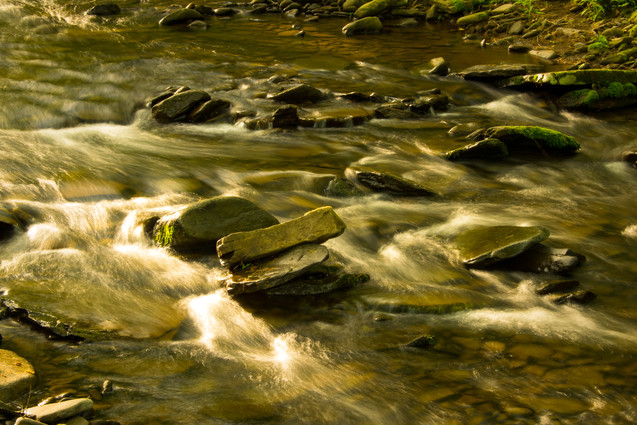 forest and stream-13.jpg