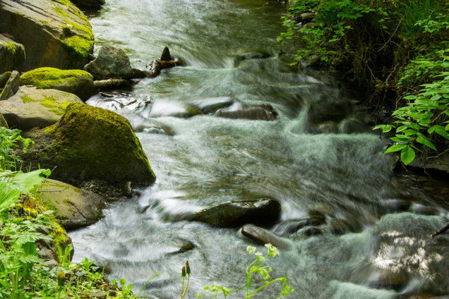 forest and stream-17.jpg