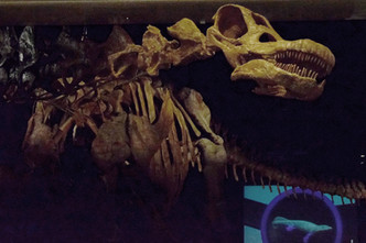 titanosaur 1.jpg