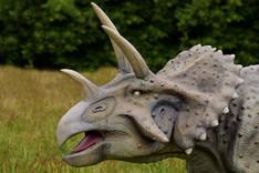 triceratops 3.jpg