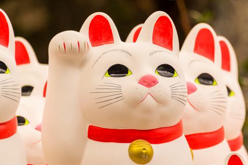 cat temple-1.jpg