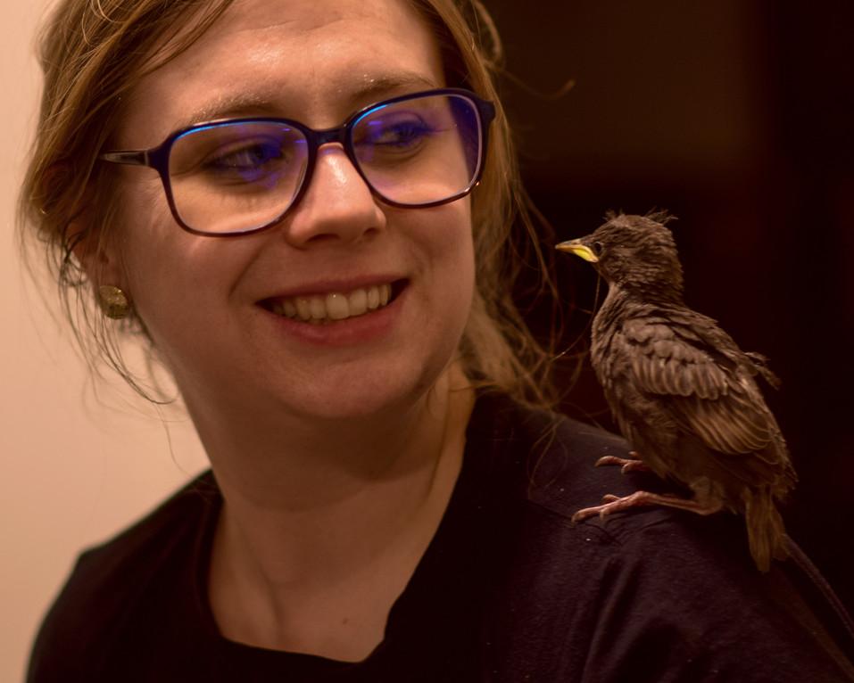 bird 911-12.jpg