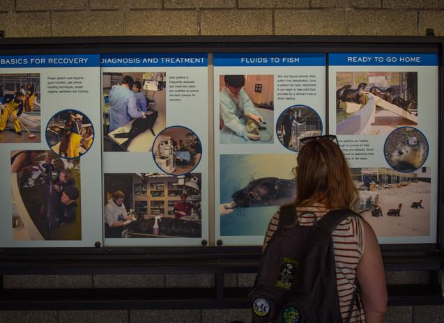 marine mammal center-5.jpg