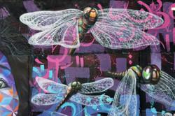 dragonfly 2