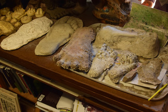 bigfoot discovery museum 11.jpg