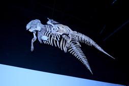 manatee skeleton.jpg