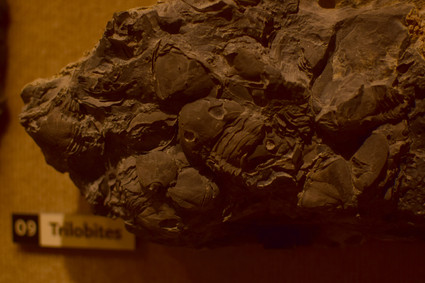 Trilobites died off after the mysterious Permian Extinction, and no direct descendants of the trilobites remain.