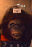bigfoot hoax mask.jpg