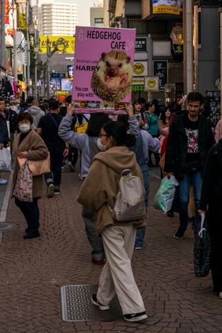 cat street-8.jpg