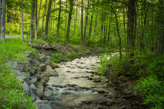 forest and stream-11.jpg