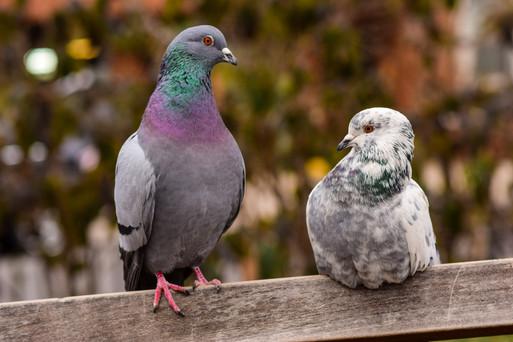bird 911-10.jpg