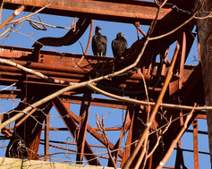 But in the rusty beams, Indy-Anna was able to find a smile, watching a pair of buzzards resting and grooming each other.