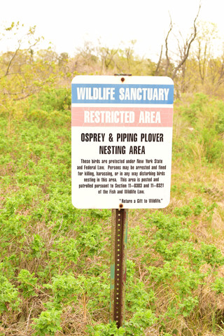 A trail spit her out onto a mud flat, a protected nesting ground for birds!