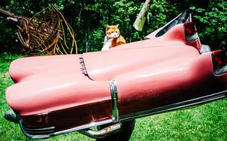 winston in a flying car_.jpg