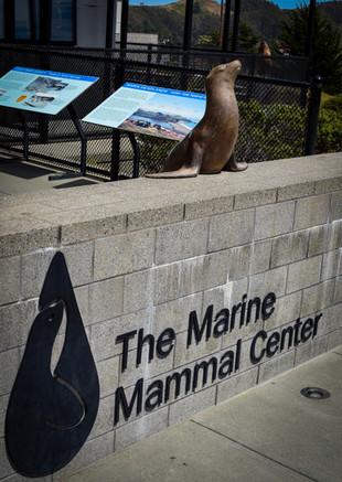 marine mammal center-12.jpg
