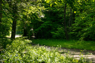 forest and stream-18.jpg