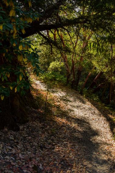 willow creek-12.jpg