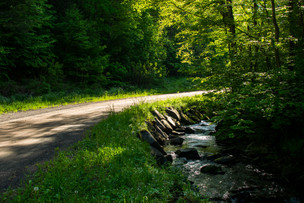 forest and stream-19.jpg