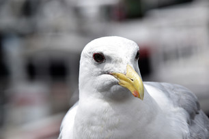 A salty seagull informed her she must seek the Center of the Universe if she wanted to find a troll.