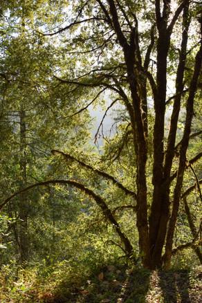 willow creek-14.jpg