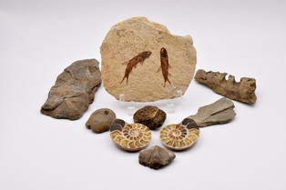 Each stone is a tiny life lived by a tiny creature.