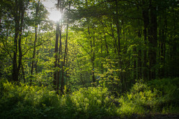 forest and stream-9.jpg