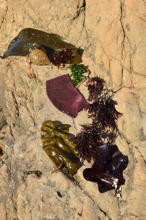 glass beach 7.jpg