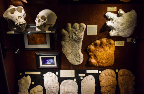The Bigfoot collection at the museum was impressive...