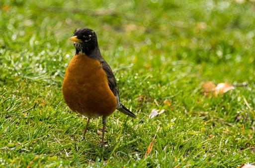 bird in the park-13.jpg
