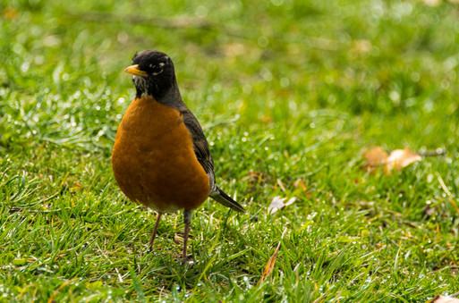 bird in the park-13.jpg