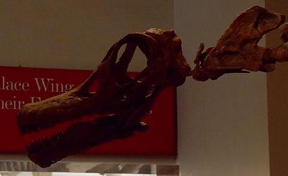 titanosaur 2.jpg