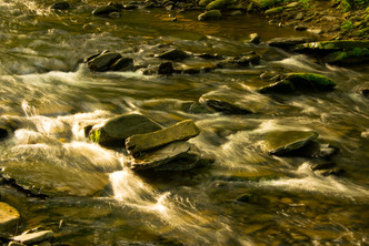 forest and stream-12.jpg