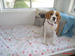 Gold Coast Pet Resorts homestay