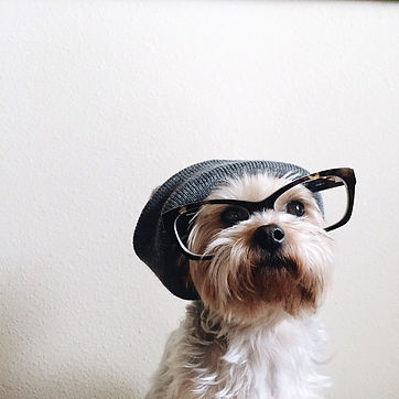 HIPSTER DOG - Copy.jpg