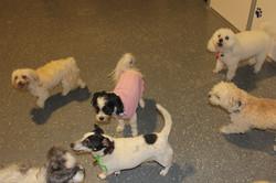 Gold Coast Pet Resorts dogs