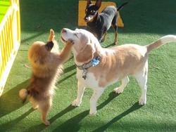 Gold Coast Pet Resorts outdoor play