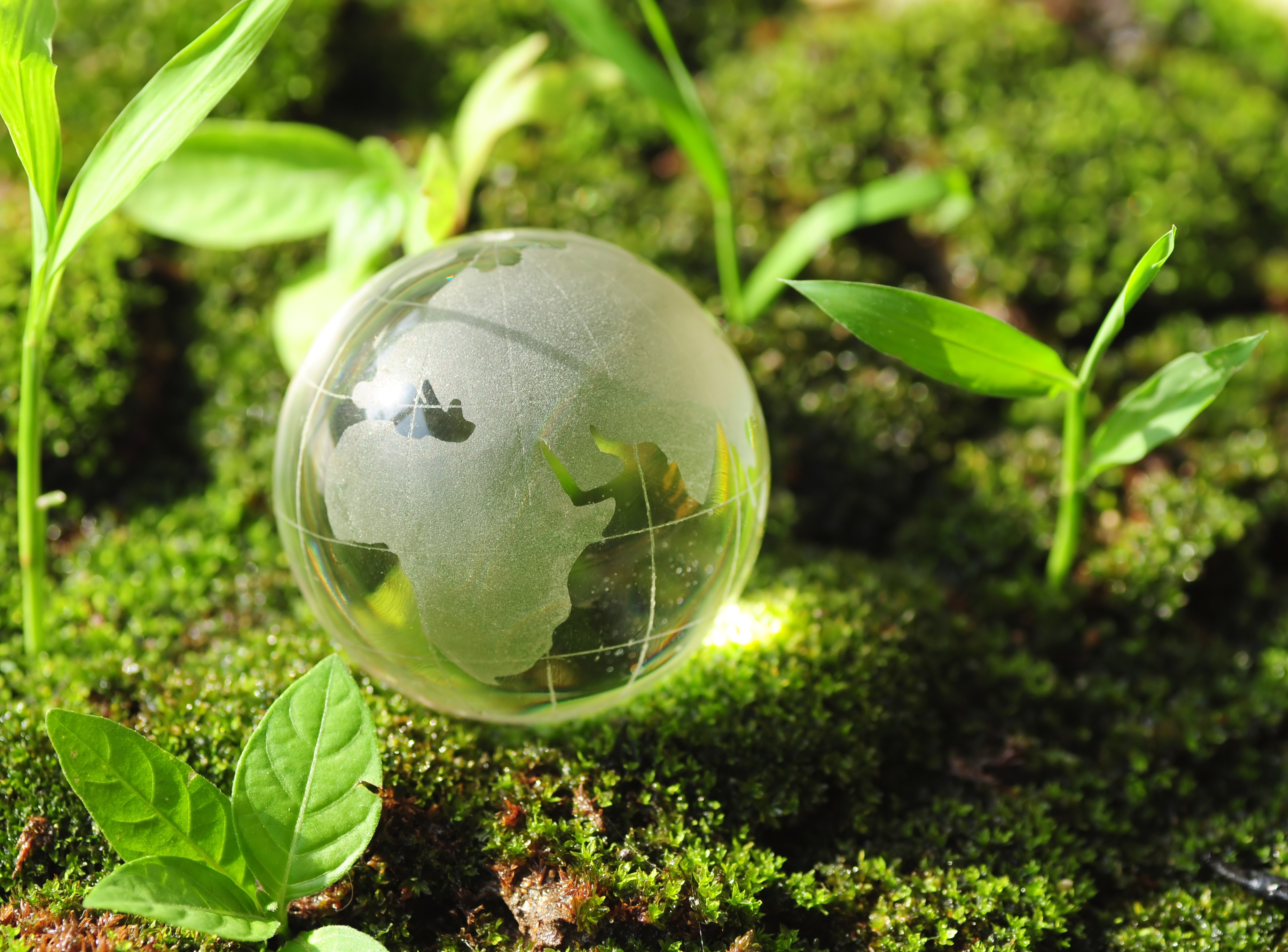 Eco Viva -