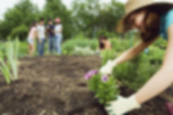 Horticultural Therapy for Veterans