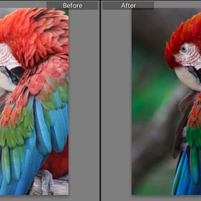 Finally trying out Lightroom