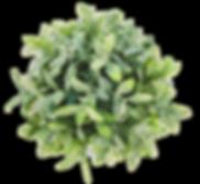 temitope-amodu-549287-unsplash.png